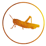 (icon 18)